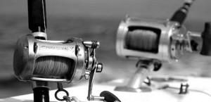 matériel pêche au gros Guadeloupe - Shimano - Penn international