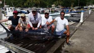 Guadeloupe peche sportive - Marlin