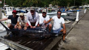 Marlin- Guadeloupe 450 Lbs - Avril 2016